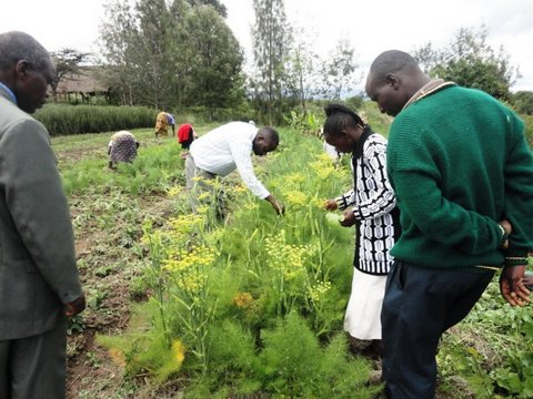 Agricultural extension agents scouting for pests and disease